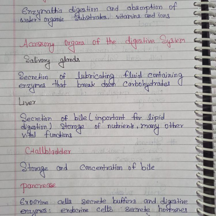 Class 11 Biology: Digestion and Absorption Handwritten Notes PDF