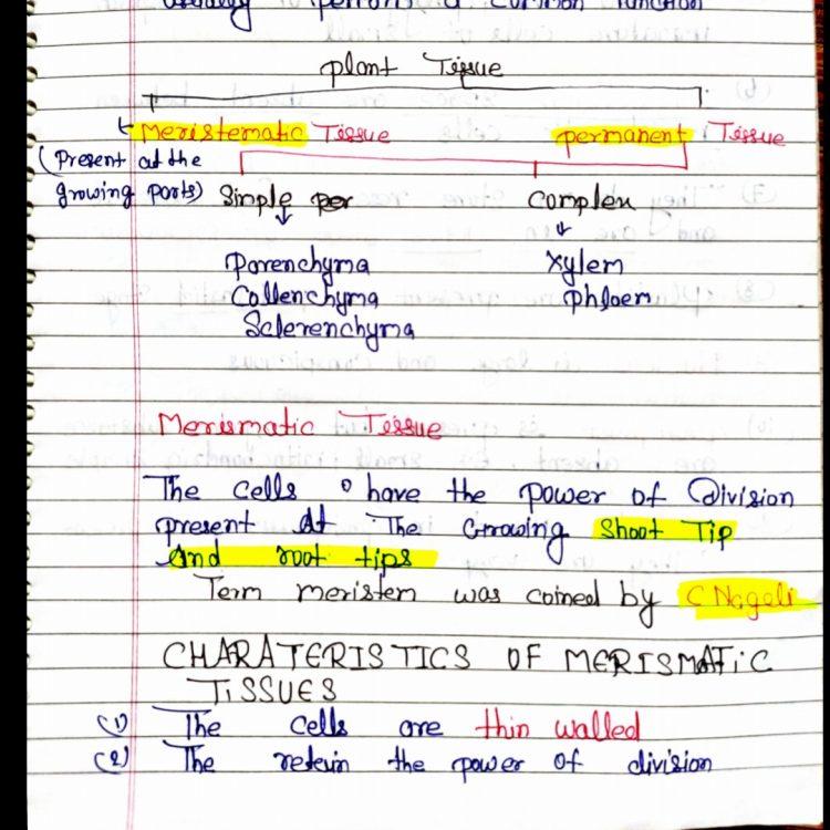 Class 11 Biology: Plant anatomy Handwritten Notes PDF